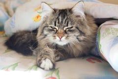 Gato agradable Foto de archivo libre de regalías