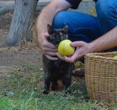 Gato agradable Fotografía de archivo libre de regalías