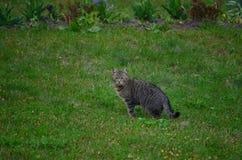 Gato agradable fotos de archivo