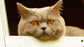 Gato agradable en la ventana fotos de archivo