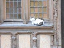 Gato agradable en una ventana de una casa de entramado de madera en Joigny, Francia foto de archivo