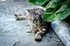 Gato agradable que miente en el asfalto Imagen de archivo
