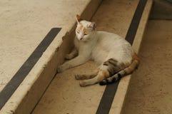 Gato agradável Fotografia de Stock