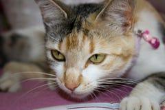 Gato agresivo Imagen de archivo