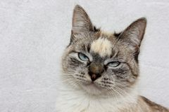 Gato agujereado Imagen de archivo