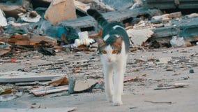 Gato ahumado hermoso sin hogar en la calle lamentable para los pobres metrajes
