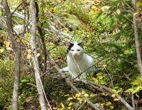 Gato al aire libre Foto de archivo