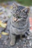 Gato al aire libre Imagenes de archivo