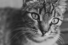 Gato al aire libre Imágenes de archivo libres de regalías