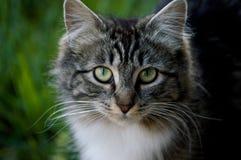 Gato al aire libre mullido Foto de archivo libre de regalías