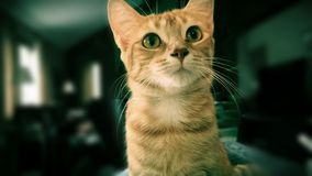Gato alaranjado bonito Fotos de Stock