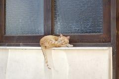 Gato alaranjado do gato de gato malhado que coloca na soleira Fotos de Stock