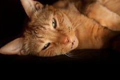 Gato alaranjado feliz Foto de Stock Royalty Free