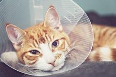 Gato alaranjado no cone do pescoço Foto de Stock Royalty Free