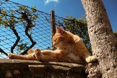 Gato alaranjado que relaxa Fotografia de Stock Royalty Free