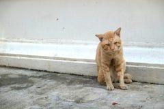 Gato alaranjado sujo Fotografia de Stock