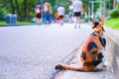 Gato alaranjado fotografia de stock