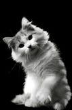 Gato alegre Fotografia de Stock Royalty Free