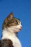Gato alerta Foto de Stock