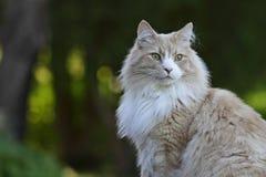 Gato alerta Foto de archivo libre de regalías