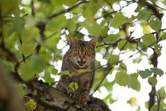 Gato alto para arriba en la caza del árbol Foto de archivo libre de regalías