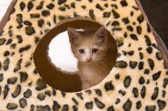 Gato amarelo que esconde na casa imagens de stock royalty free