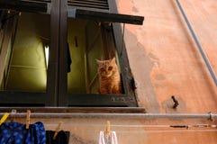 Gato amarillo hermoso que mira hacia fuera de la ventana fotos de archivo