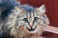 Gato amedrontado foto de stock