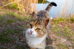 Gato amistoso Imagenes de archivo