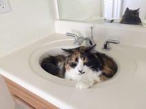 Gato amistoso del cuarto de baño Imagenes de archivo