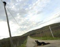 Gato & cão imagens de stock