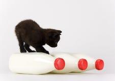 Gato & leite fotos de stock royalty free