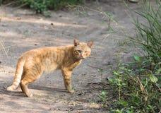 Gato anaranjado al aire libre en naturaleza Foto de archivo libre de regalías