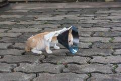 Gato anaranjado con el cono veterinairy en su cabeza Imágenes de archivo libres de regalías