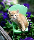Gato anaranjado del gatito del gato atigrado en silla del verde del metal en jardín Imagenes de archivo