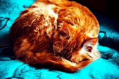 Gato anaranjado que miente en una superficie azul imagenes de archivo