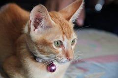 Gato anaranjado que se coloca en el piso Fotos de archivo