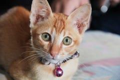 Gato anaranjado que se coloca en el piso Foto de archivo