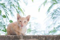 Gato anaranjado que se sienta en la pared imagen de archivo libre de regalías