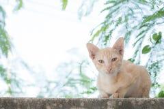 Gato anaranjado que se sienta en la pared foto de archivo libre de regalías