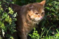 Gato anaranjado rojo perdido lindo al aire libre en hierba en naturaleza Cierre hermoso del retrato del gato para arriba fotografía de archivo