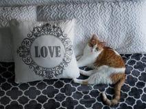 Gato anaranjado y blanco al lado del AMOR imágenes de archivo libres de regalías
