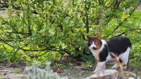 Gato, animal, olhos preto e branco, verdes, natureza, verde Foto de Stock