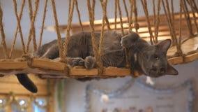 Gato, animal precioso del mamífero y animal doméstico almacen de video