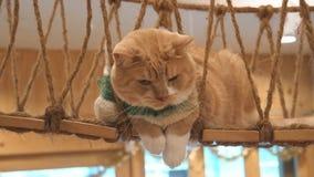 Gato, animal precioso del mamífero y animal doméstico metrajes