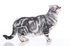 Gato ansioso isolado lateralmente foto de stock