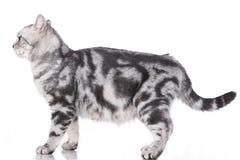 Gato ansioso isolado lateralmente imagens de stock