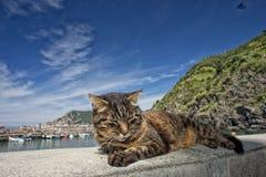 Gato ao descansar no porto de Vernazza fotos de stock royalty free