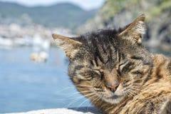 Gato ao descansar no porto de Vernazza foto de stock royalty free