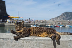 Gato ao descansar no porto de Vernazza fotos de stock royalty free